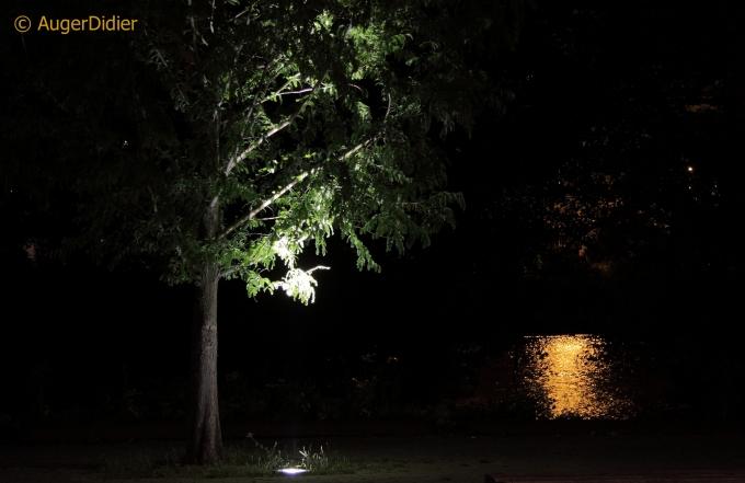 comme un arbre sans la ville.JPG