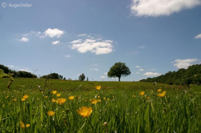 couché dans l'herbe.JPG